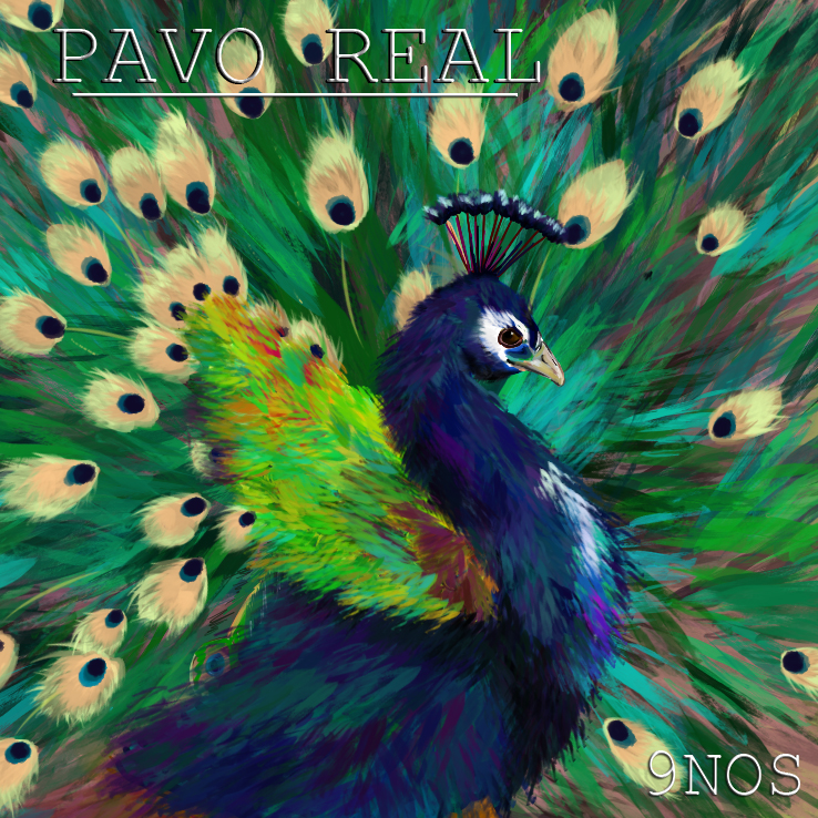 9nos pavo real lbum hip hop groups - Fotos de un pavo real ...