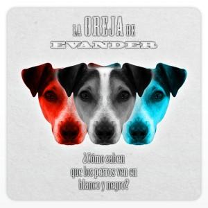 Deltantera: La oreja de Evander - ¿Cómo saben que los perros ven en blanco y negro?