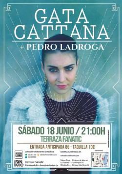 Gata Cattana en Sevilla
